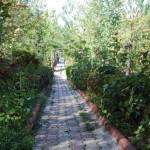 Turhal-Polis-Evi-Bahçe